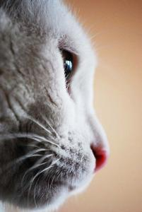 Katze - Fest im Blick