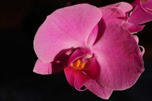 Pflanze - Orchidee