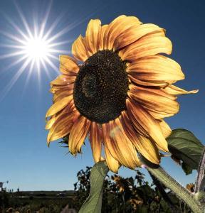Sonne von Hinten