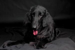 Hundeshooting 2019.06.07