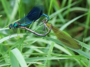 Insekten 002