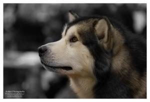 Tierfotografie 027
