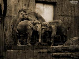 sad elefants
